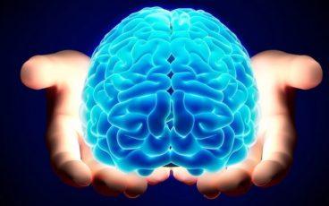 cervello memoria